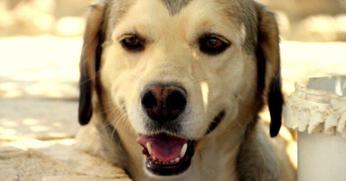 cucciolo cane saluta