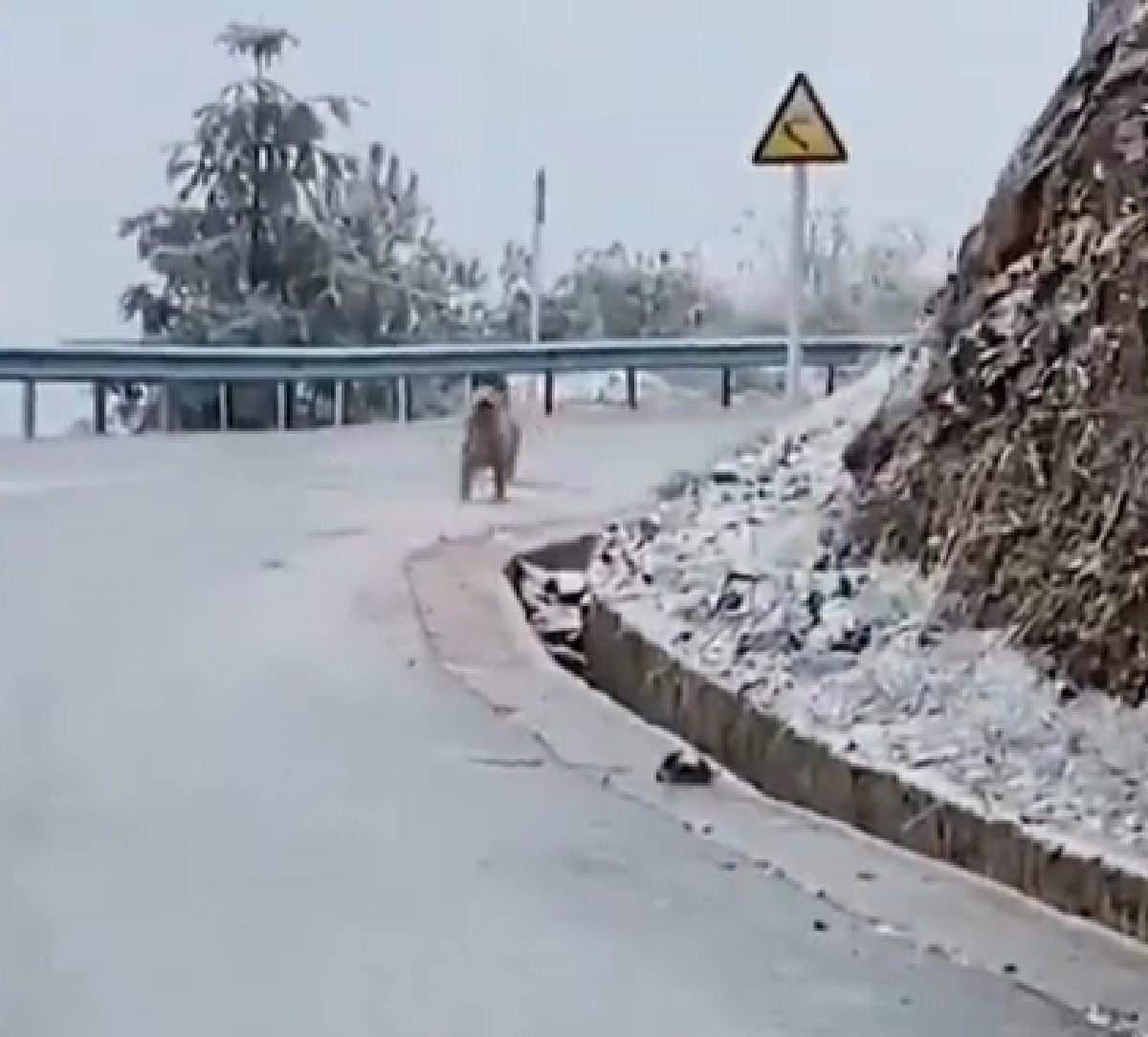 Questo cucciolo Golden Retriever ha un debole per le strade ghiacciate, il divertente video
