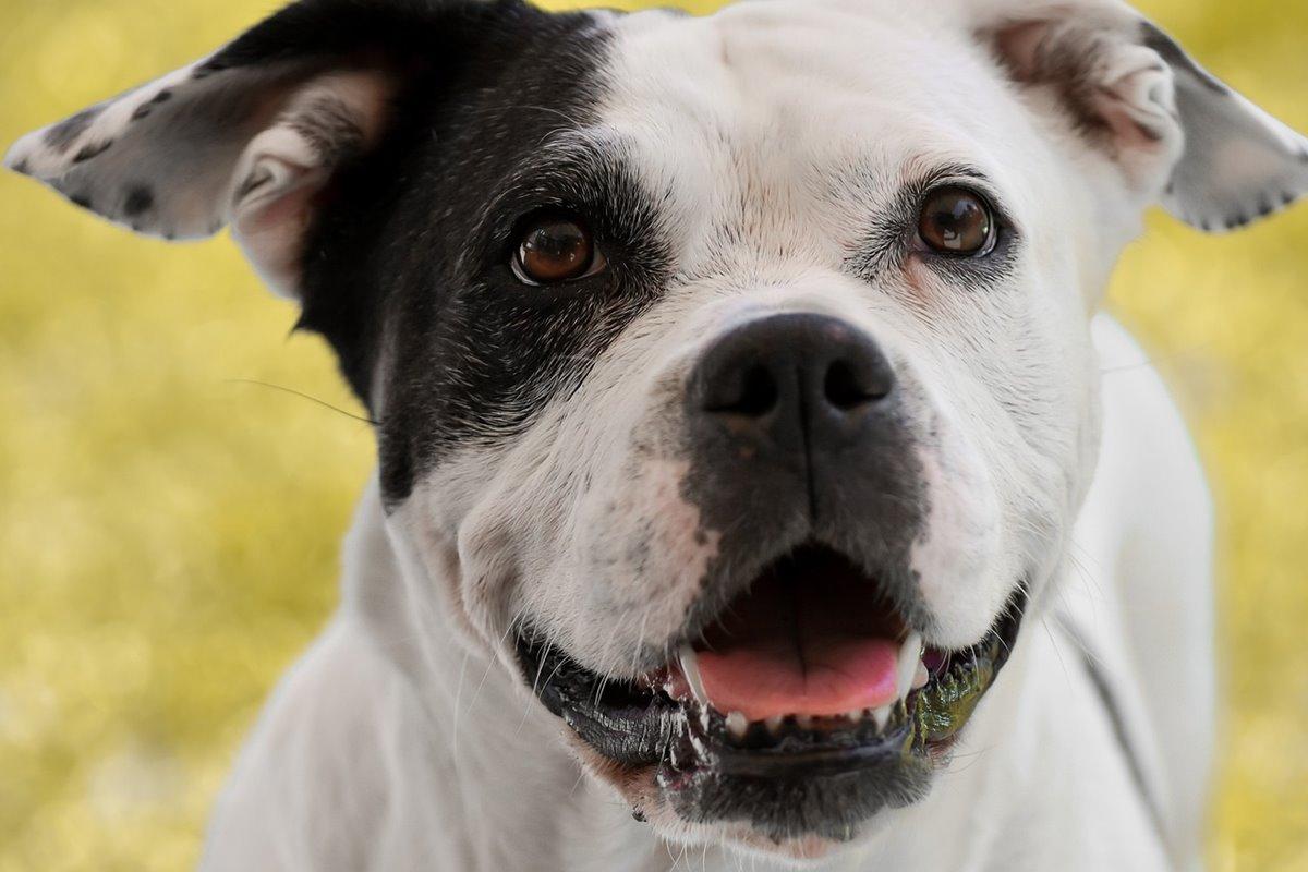 Riflessi condizionati del cane: quali sono e a che servono