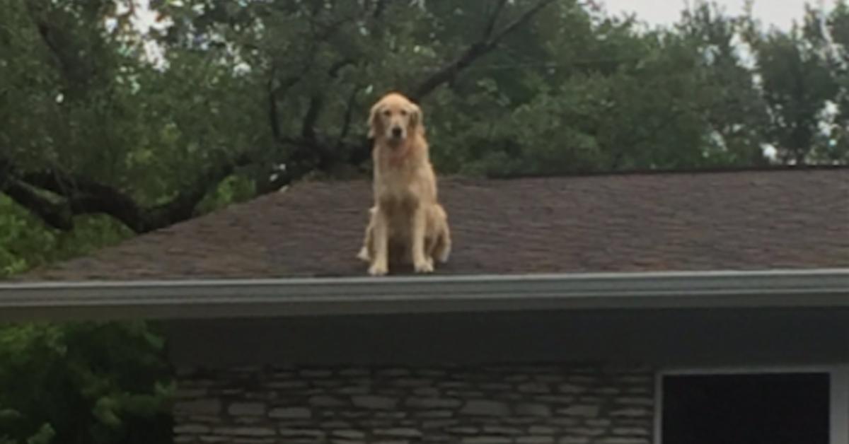 Huck seduto sul tetto