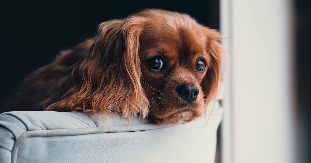 segnali del cane che deve fare la pipì