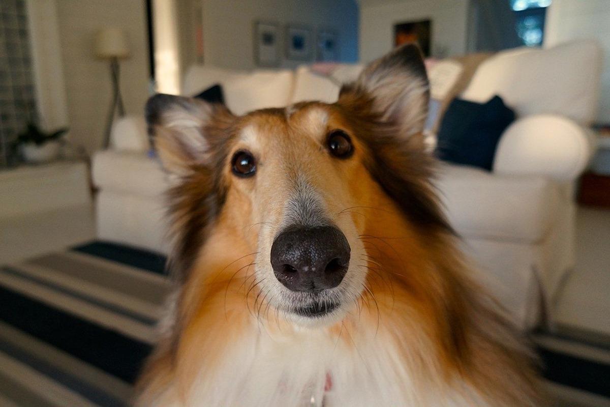 cane buffo con il muso lungo