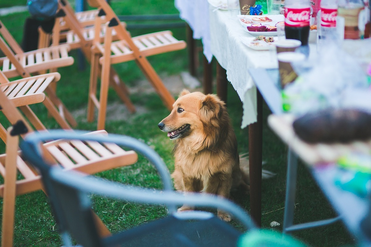 cane sta vicino alla tavola imbandita