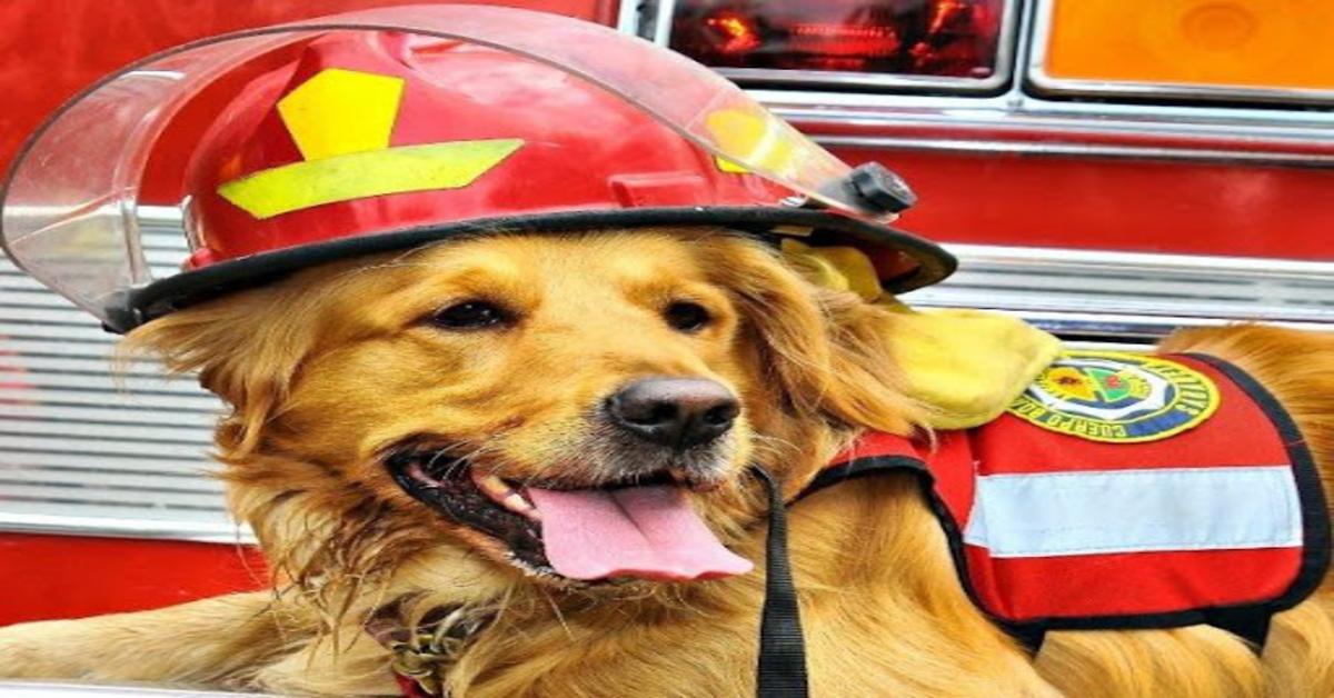 Tina cane pompiere con casco