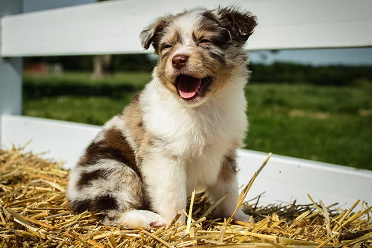 cucciolo bianco e marrone