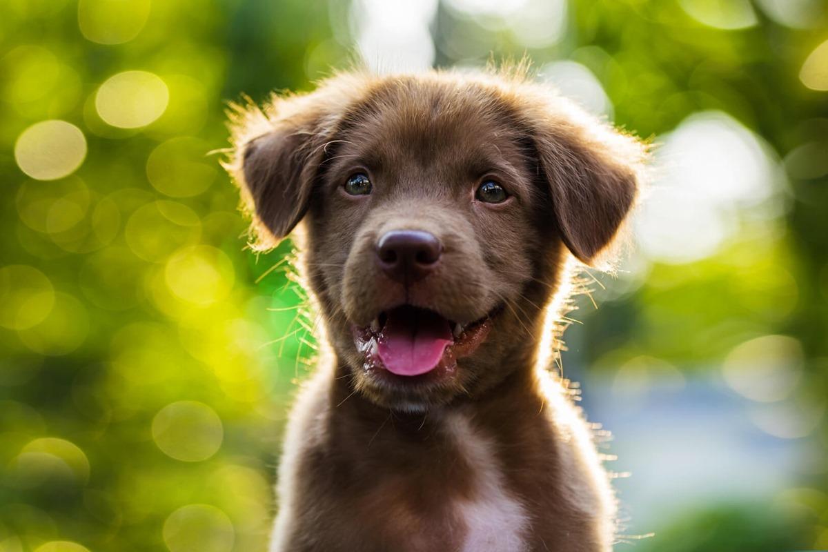 cagnolino con il pelo marrone