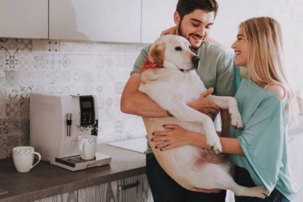 5 vantaggi nell'acquistare cibo per cani online