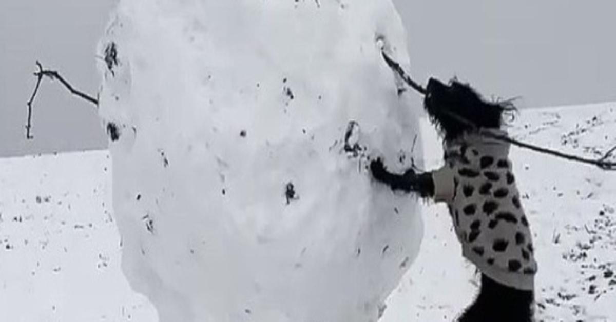 Alice cagnolina pupazzo di neve video
