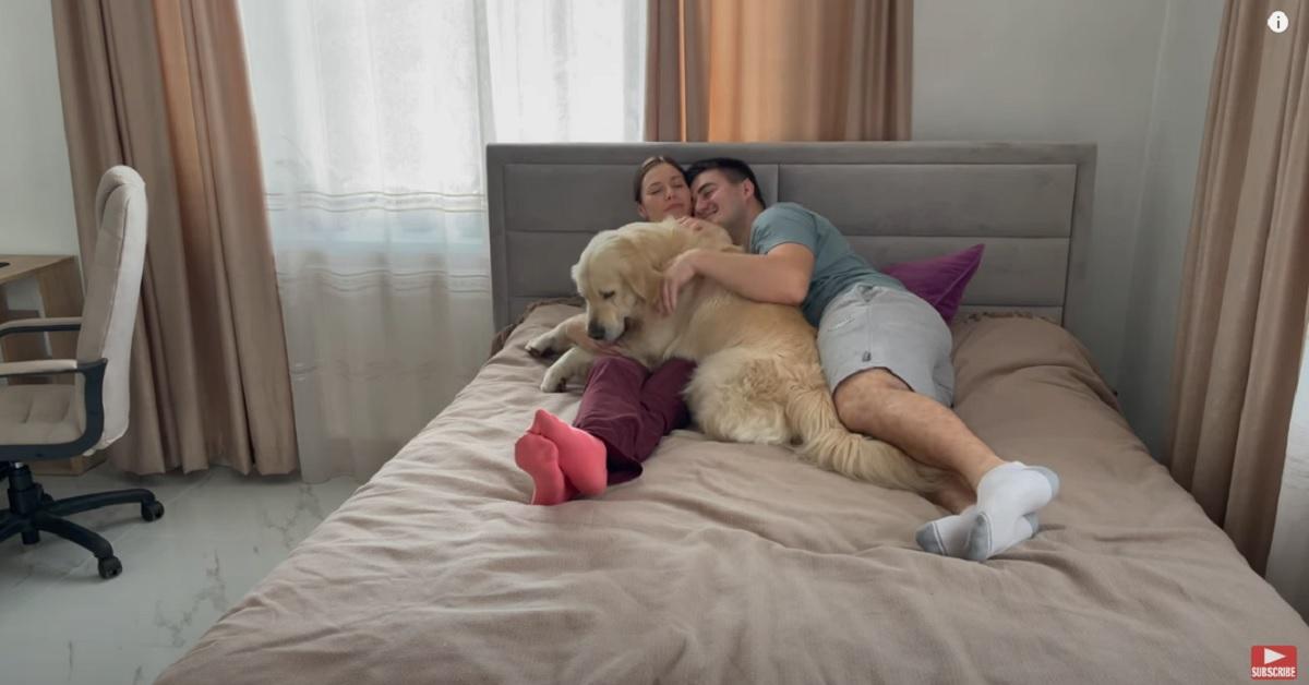 Il cucciolo di Golden Retriever richiede più attenzioni ai genitori umani (VIDEO)