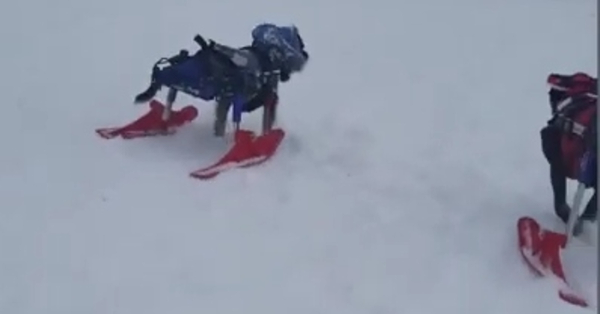 Cagnolini disabili video
