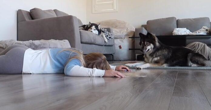 Husky con proprietaria sdraiata