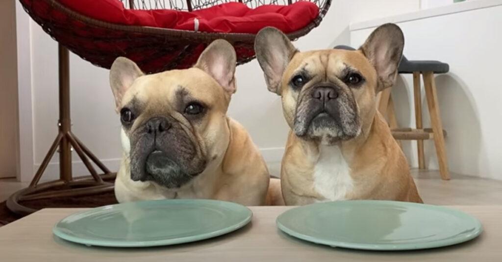 """I due cani Bulldog Francese affrontano un particolare test di assaggio di cibi """"strani"""" (video)"""