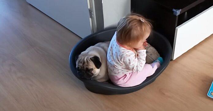 Carlino con una bambina