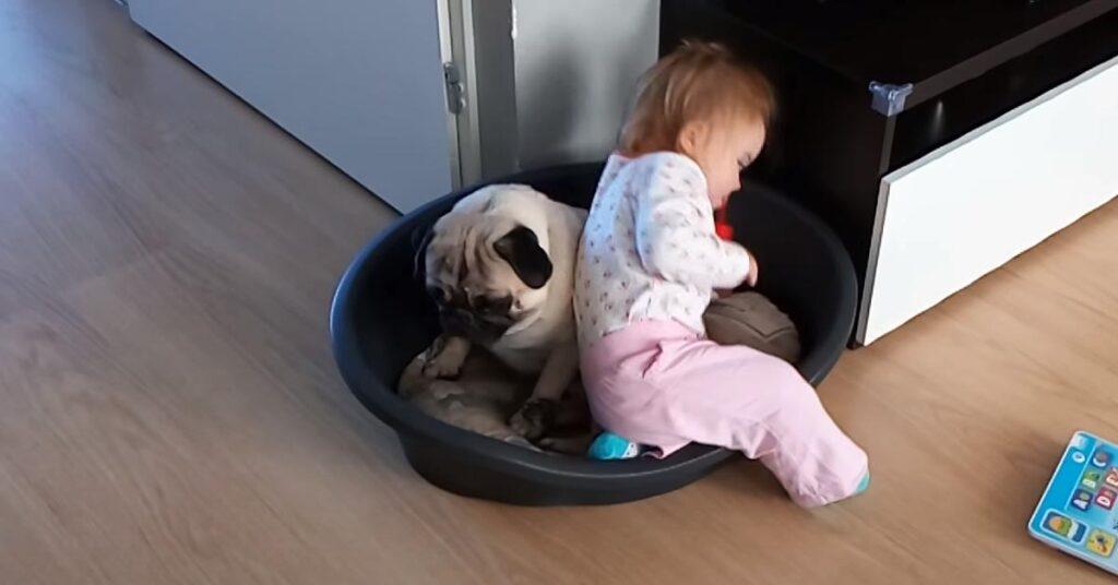 Il Carlino e la sua amica bambina adorano condividere tutto, anche la cuccia (video)