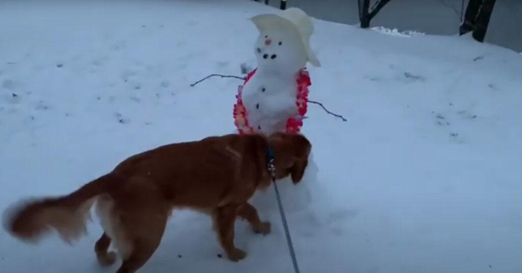Golden Retriever con un pupazzo di neve