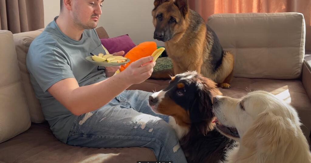 Cani che osservano il padrone che mangia