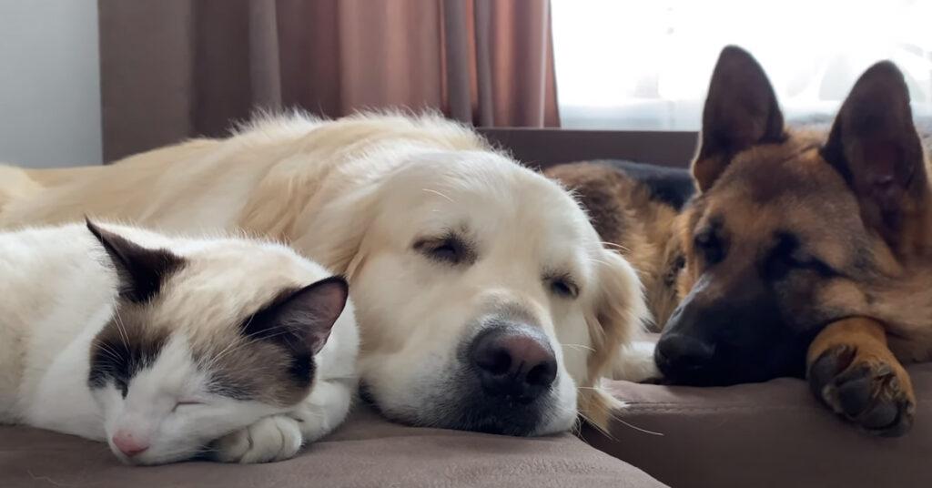 Due cani e un gatto che dormono insieme