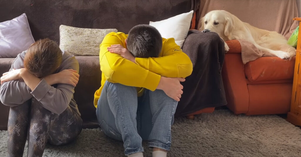 Il Golden Retriever reagisce di fronte ai suoi proprietari tristi e il momento è molto tenero (video)