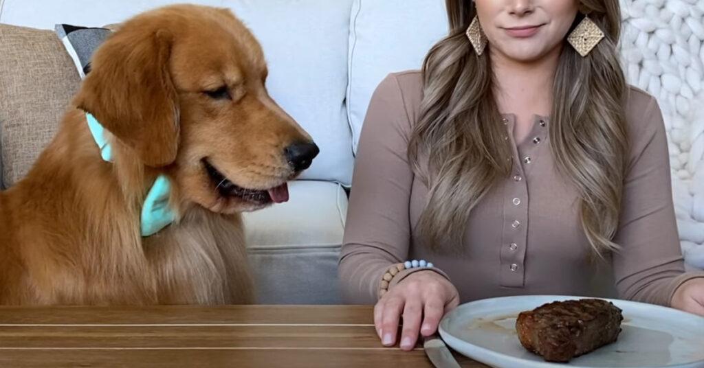 Golden Retriever con una bistecca