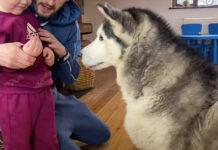 Husky con la sua famiglia