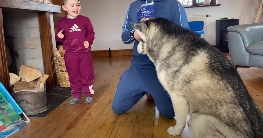 """Il Siberian Husky un po' """"testardo"""" prova ad imparare i comandi base dal suo amico bambino (video)"""