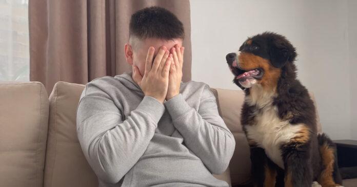 Cucciolo di Bovaro del Bernese con il proprietario