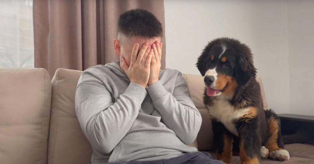 Il cucciolo di Bovaro del Bernese ha una reazione molto tenera di fronte al padrone che piange (video)