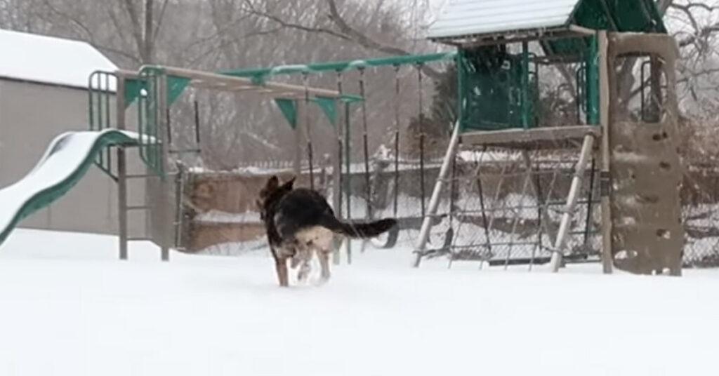 Il cucciolo di Pastore Tedesco vede la neve per la prima volta e la sua reazione è virale