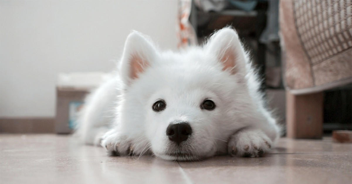 cucciolo di cane adora le carezze sulla pancia