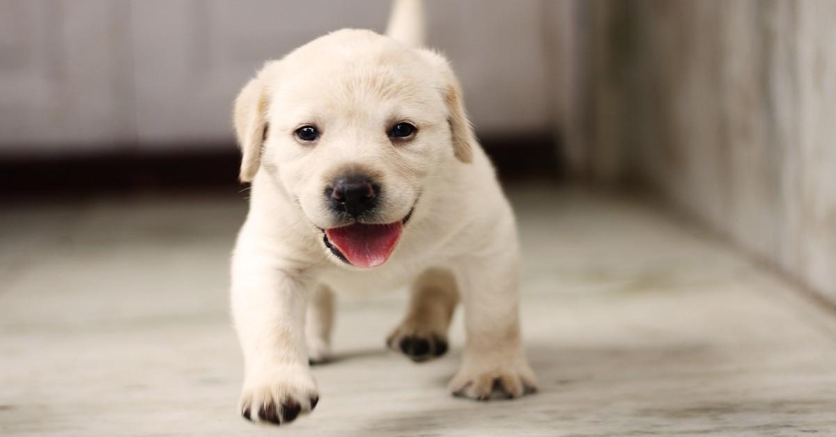 cucciolo di cane regala tanti bacini al suo padroncino