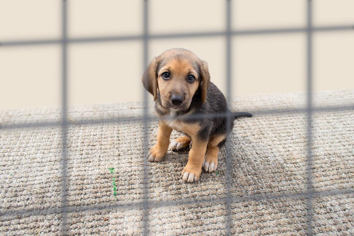 cucciolo di cane in gabbia