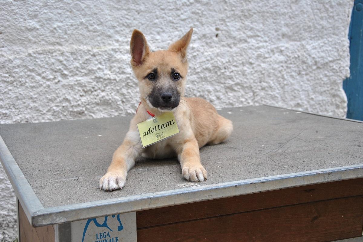 cucciolo di cane in adozione