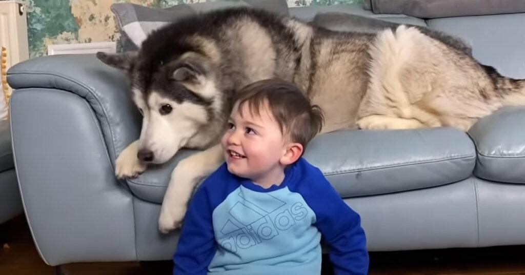 Husky con un bambino