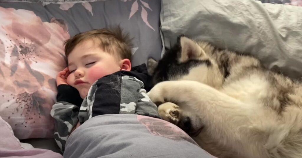 Husky che dorme con un bambino