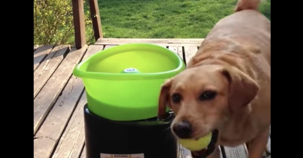 Cane contento gioca da solo con lancia palline