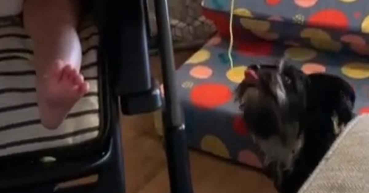 Link cagnolino spaghetto video