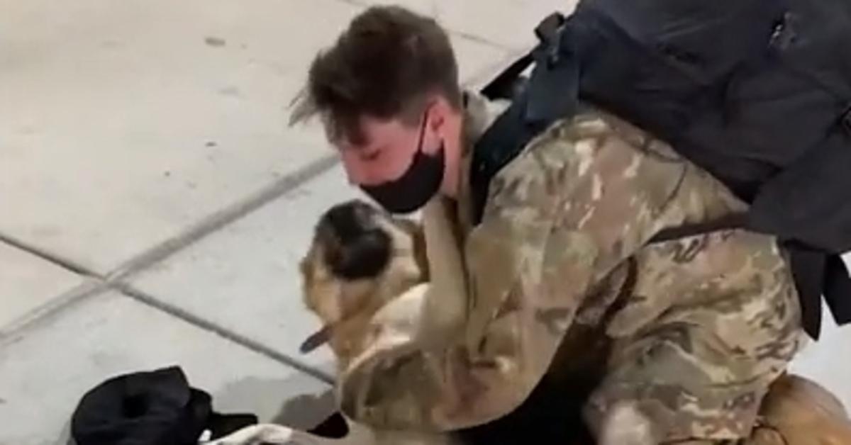 Nala, il Pastore Tedesco accoglie in aeroporto la sua mamma umana: un militare tornato a casa (VIDEO)