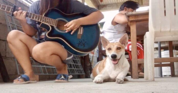 cane Puchi ascolta padrona che suona chitarra