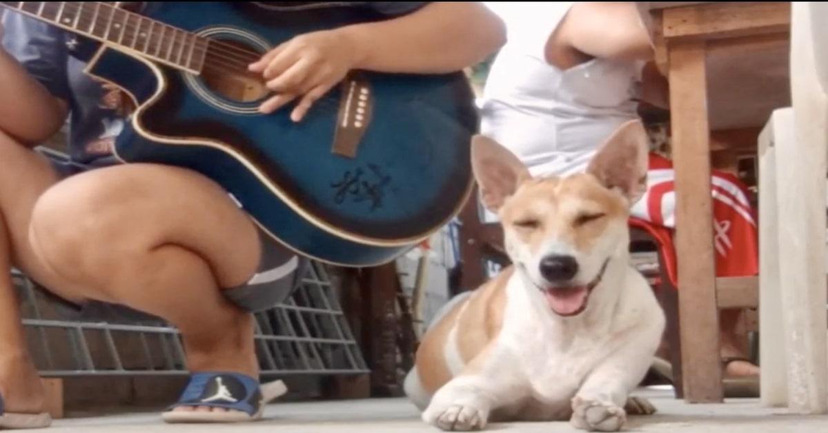 Il cucciolo di cane Puchi fa un grande sforzo per non addormentarsi mentre la padrona suona la chitarra (VIDEO)