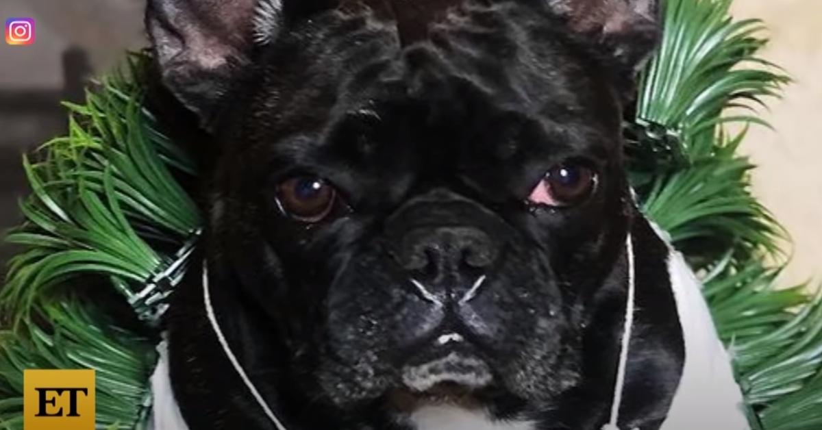 Lady Gaga Bulldog rapiti video