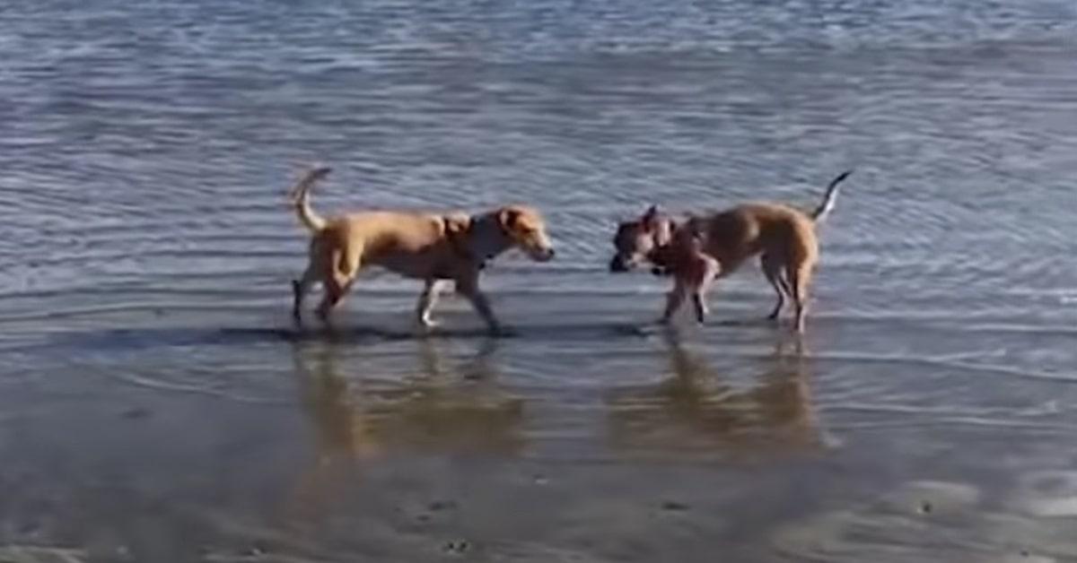Rogue e Beast al mare