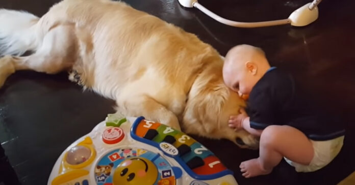 Golden Retriever con un bambino
