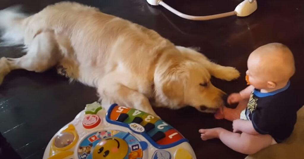Samson e Aiden, il Golden Retriever e il bambino uniti da un'amicizia speciale (video)