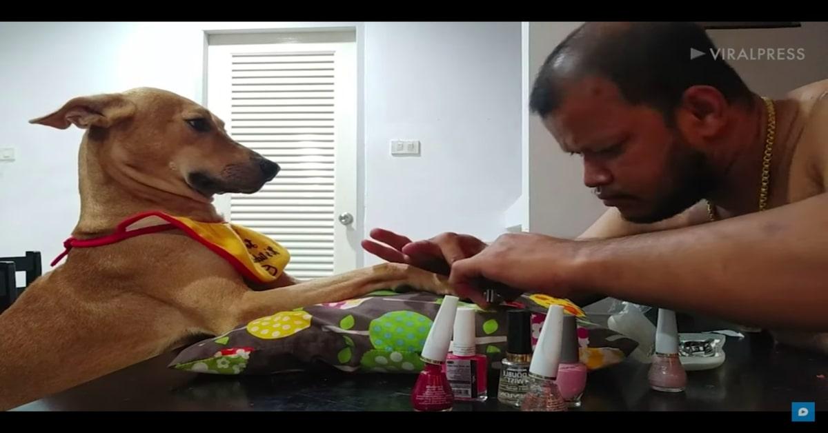 Sasa, la cucciola di cane che si fa fare tranquillamente la pedicure (VIDEO)