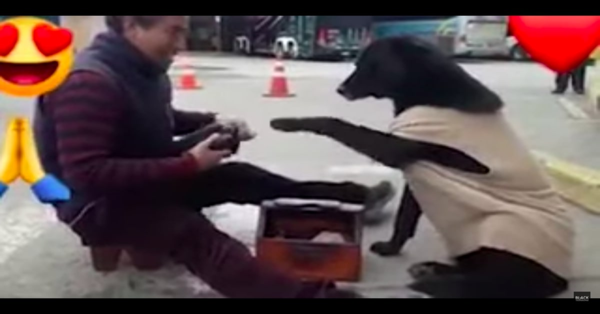 lustrascarpe lucida zampe del cane