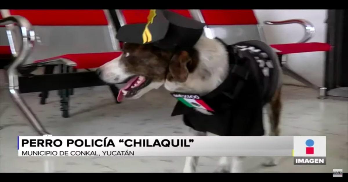 cane poliziotto con divisa cammina