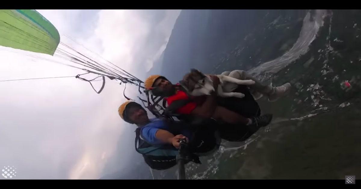 Cane senza paura in parapendio