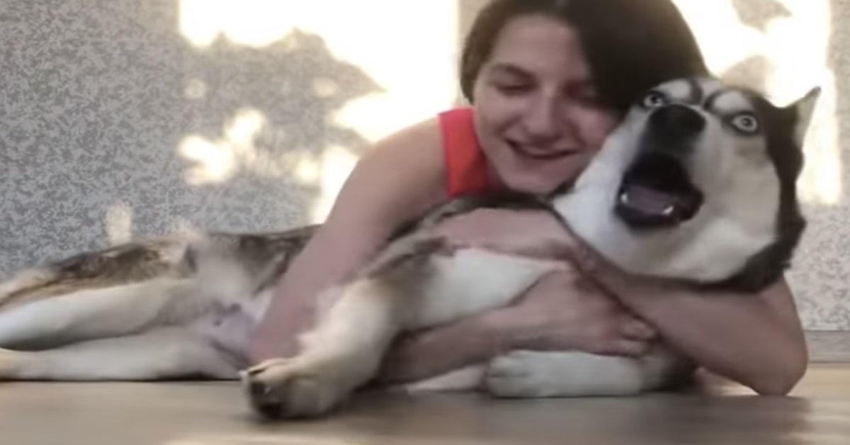 la ragazza abbraccia l'husky all'improvviso