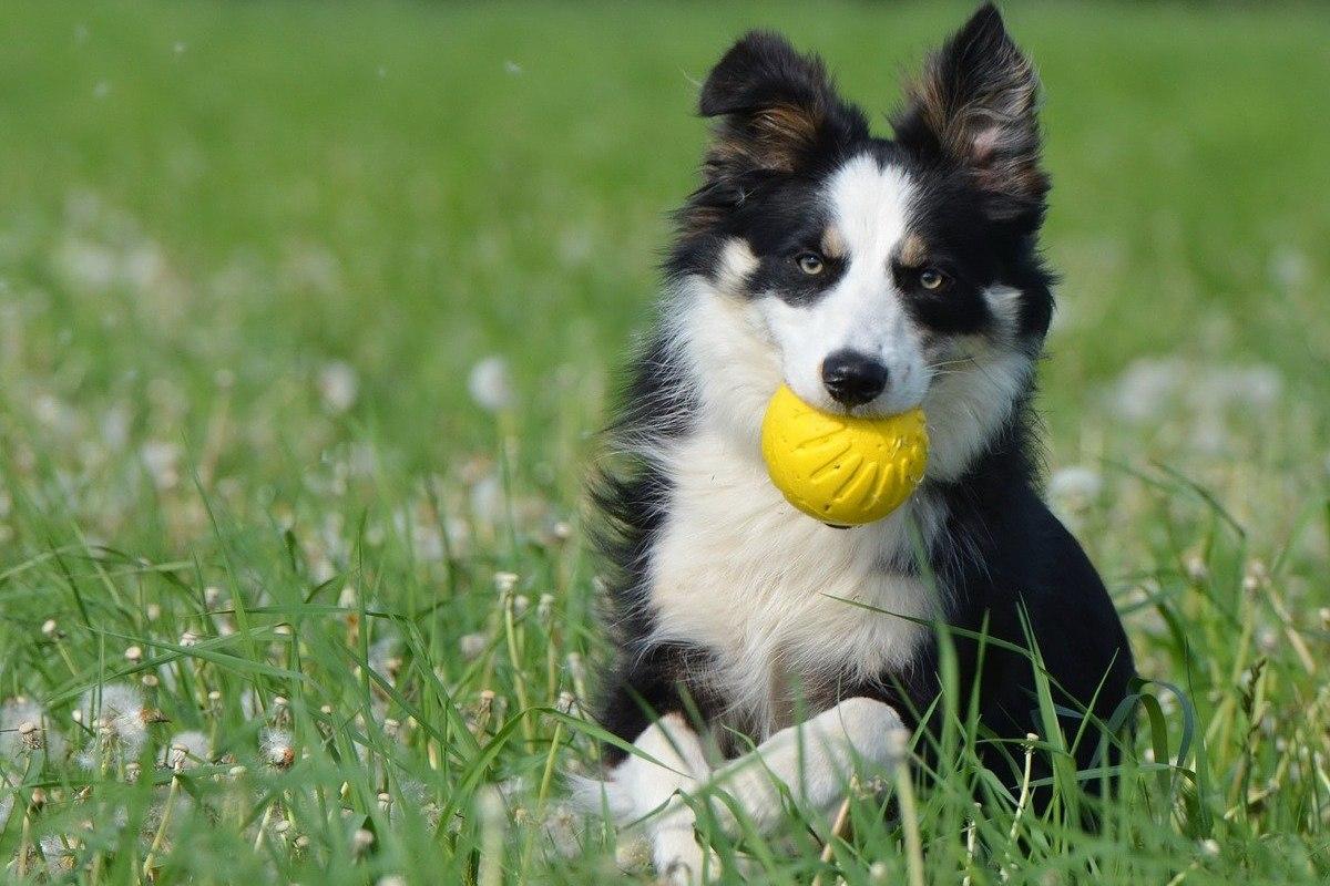cucciolo con la palla