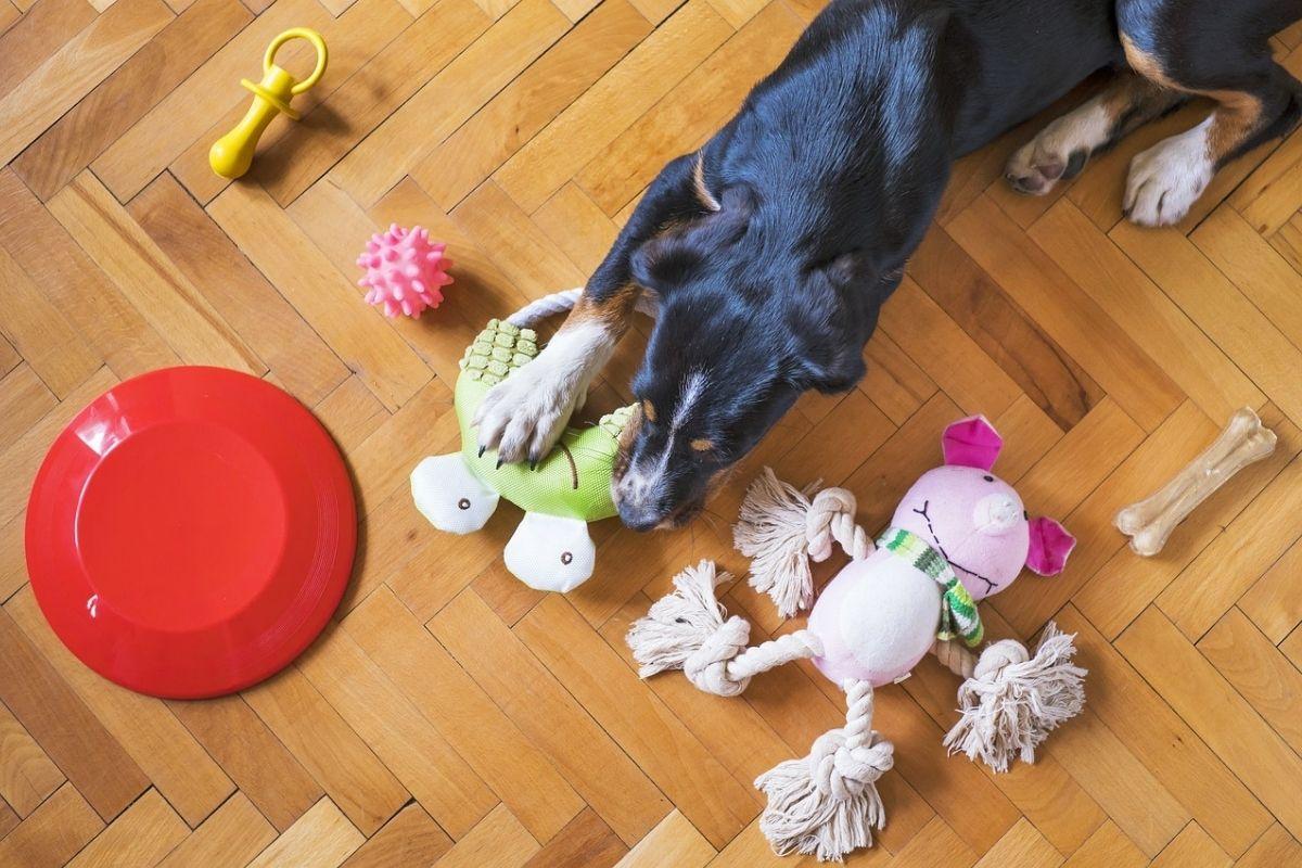 cane steso sulla pancia con tanti giochi a disposizione